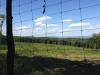 Vadvédelmi kerítés.