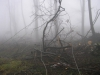 Erdő, 400 méter fölött...