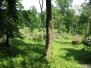 2009-termeszetrombolas